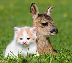 Mandatory Credit: Photo by Image Source/Rex / Rex USA ( 748059a ) Fawn And Kitten Sitting On Grass VARIOUS Original Filename: rexusa_748059a.jpgvia Flatbed Web