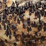 13 bats squeaking