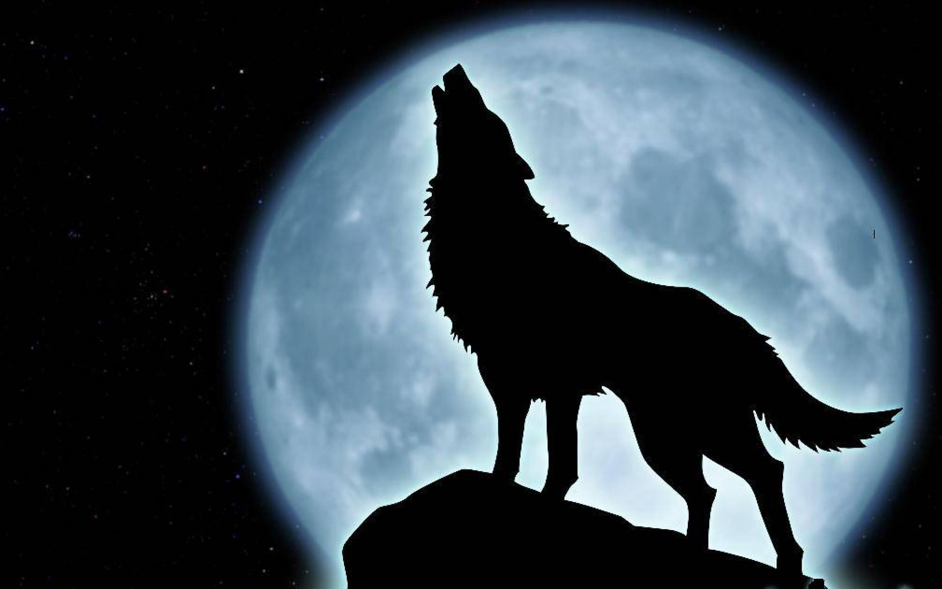 2 a wolf howling
